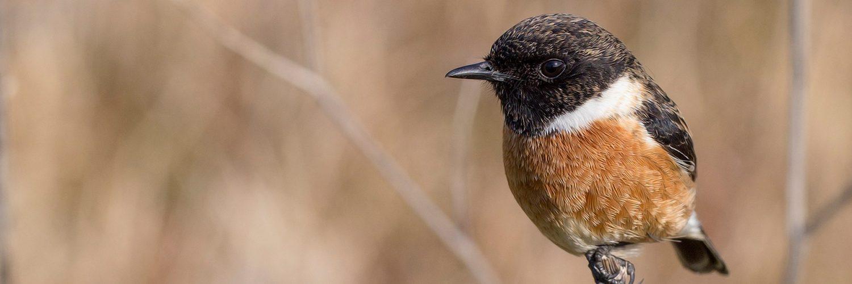 De dag van… de Nationale Tuinvogeltelling