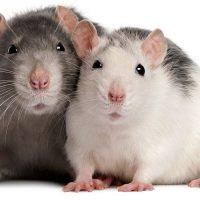 De Dag van Wereldproefdierenda...