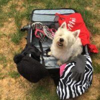 De koffer van… Paulien