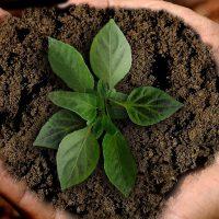 The big five – duurzaamheidstips